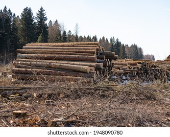 Sawed logs are stacked in schnabel, stumps and branches are visible, deforestation in early spring in the Moscow region, 2021