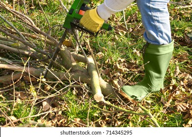 Sawing Of Branches With Chainsaw; Garden Works; Tree Maintenance; Use Of  Electrical Appliances