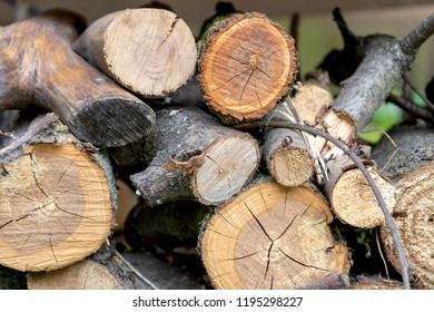 Sawn across the fruit tree. Firewood for barbecue.