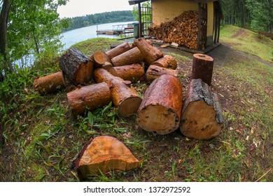 Sawn wood on the lake