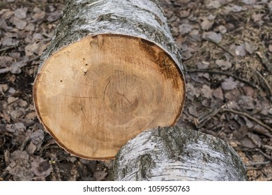 sawn-off tree on brown rustic background