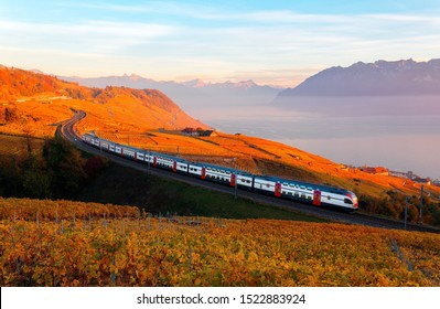 An SBB train traveling on a railway curve thru Lavaux vineyard terraces on the shore of Lake Geneva with the grapevines turning into golden colors at sunset in autumn, in Grandvaux, Vaud, Switzerland