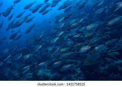 scad jamb under water / sea ecosystem, large school of fish on a blue background, abstract fish alive