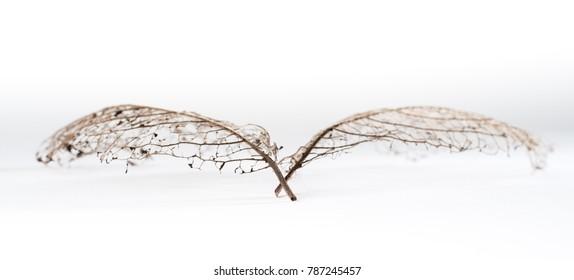 Scaffold of a leaf