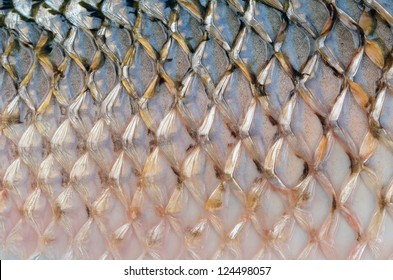 Scales of fish close up