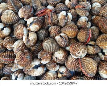 Scallop sale at the market,Anadara granosa,fresh boiled cockles. Seashell background