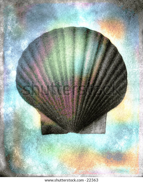 A scallop sea shell. Photographed with with lots of texture and tones.