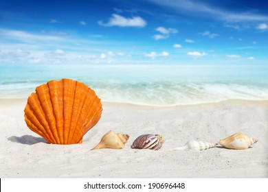 Scallop Seashell and some others Seashells on the Beach with much Copy Space