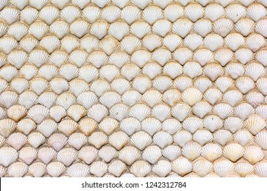 Scallops, decoration for a wall. Scallop is a common name that is primarily applied to any one of numerous species of saltwater clams or marine bivalve mollusks.