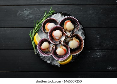 Scallops on ice. Seafood. Top view. On a black background. Free copy space.