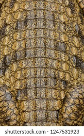 The scaly skin of a crocodile in close-up