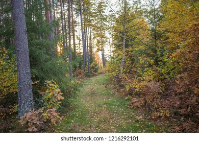 Scandinavian forest at late autumn afternoon