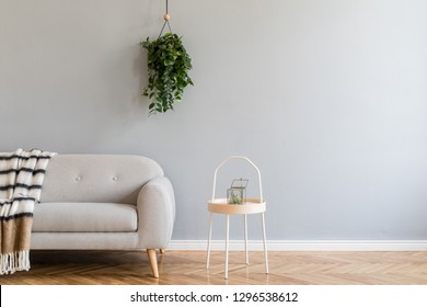 Scandinavian home interior with grey design sofa, wooden coffe table, plant and stylish blanket. Copy space for inscription, mock up poster. Brown wooden parquet. Concept of modern home interior.