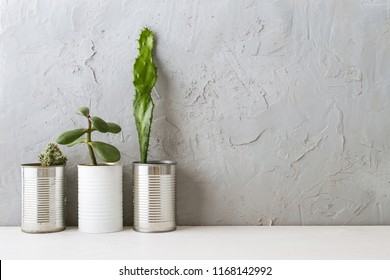 scandinavian interior shelf with succulents and frame on concrete wall