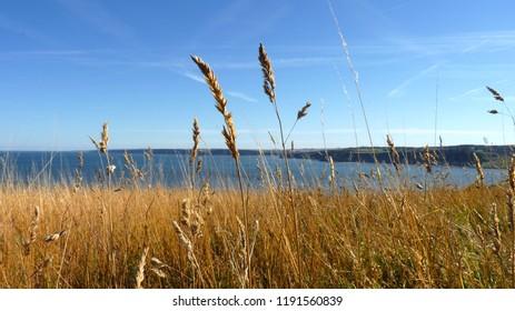 Scarborough Cliff Top - Grass