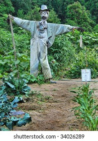 Scarecrow: Bearded Scarecrow on duty in mountain vegetable garden