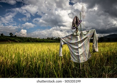 Scarecrow in a beautiful paddy field with amazing cloudy sky, Chiang Mai, Thailand