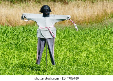 Scarecrow in corn field near the village Mos / Northern Portugal, on the portuguese way of St. James (Camino de Santiago de Compostela)
