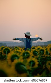 Scarecrow in corn field at sunrise. Scarecrow in the garden