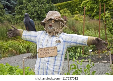 A scarecrow, with a crow on his shoulder, stood in the vegetable gardens of Pollok Park.