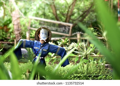Scarecrow in green vegetable garden