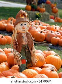 Scarecrow in the middle of a patch of pumpkins