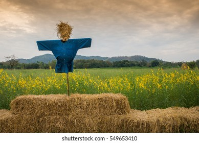 Scarecrow on straw bales and crotalaria flowers farm with mountain in evening at Thailand