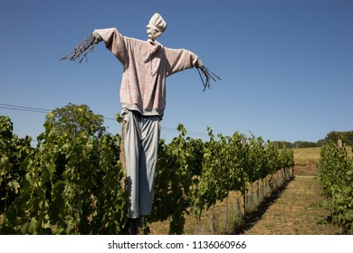 Scarecrow On Vineyard Field Against Sky During Sunny Day