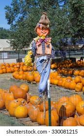 scarecrow over pumpkins