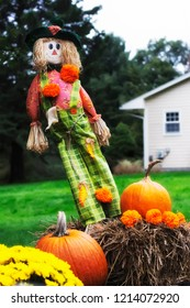 A scarecrow and pumpkin patch outside