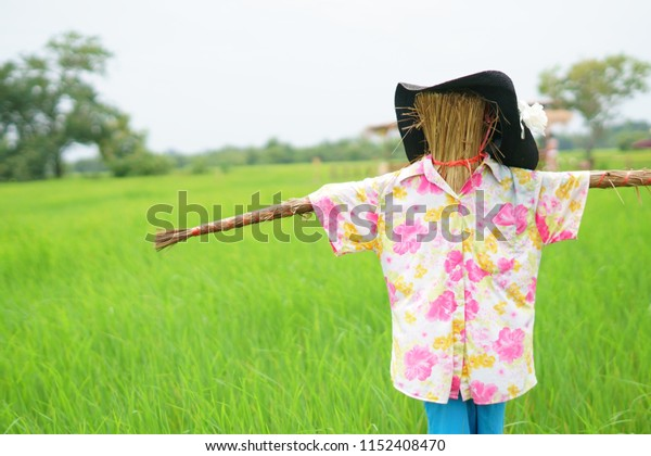 Scarecrow in rice countryside of Thailand.