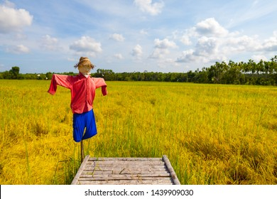 Scarecrow in rice field. Scarecrow on blue sky. Scarecrow red shirt. Scarecrow Blue Pants.