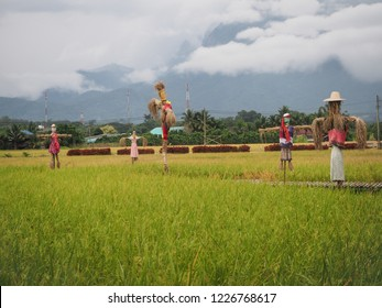 scarecrow in rice field in Thailand.