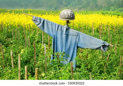 Scarecrow in rural area of Bangladesh