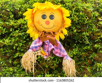 Scarecrow, smiling sunflower scarecrow with bright checked shirt and straw poking from his arms.  Outdoor setting.  Horizontal.