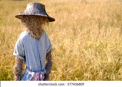 Scarecrow standing in a rice farm.