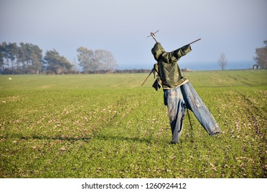 Scarecrow standing in the sunshine in a farmers green field at the swedish island Oland