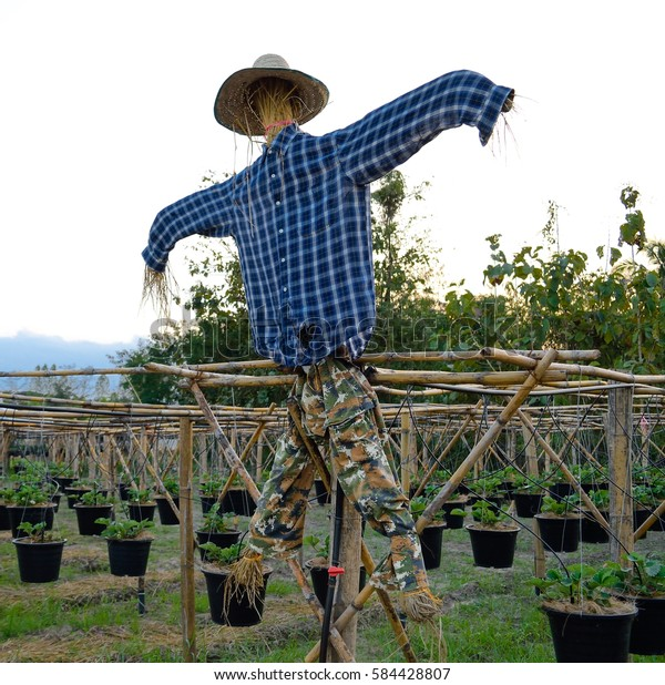 Scarecrow Strawman Wearing Blue Shirt Stand Stock Photo (Edit Now