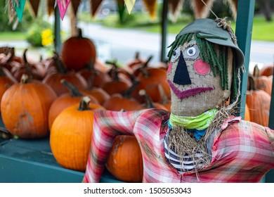 A scarecrow at a Vermont farm during harvest season. Pumpkins for sale