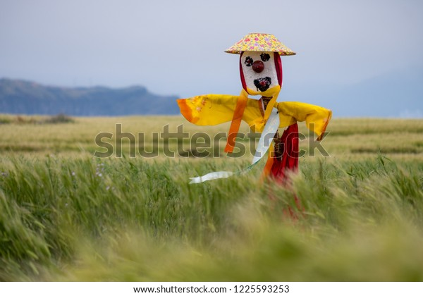 Scarecrow with yellow and red dress, as well as flower hat in field of barley on an island off Jeju, on a windy gray day