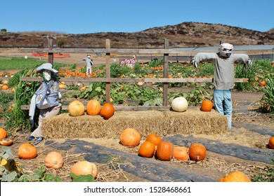 Scarecrows mounted in a pumpkin patch on a sunny autumn day at Tanaka Farms in California