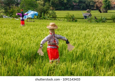 Scarecrows at a rice field. Rural landscape. Bali, Indonesia