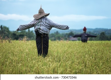 Scarecrows standing at green rice field. Vintage color tone.