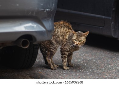 Scared and aggressive cat on the street