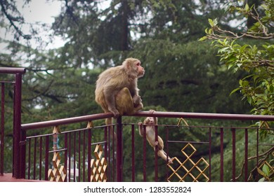 Scared Baby Monkey Grabbing Mother