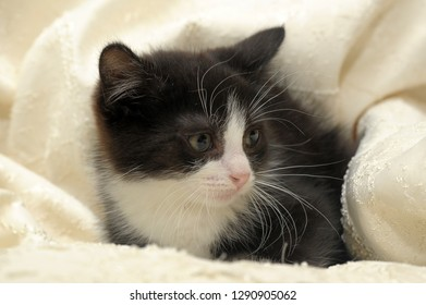 scared black and white kitten on a light background