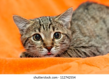 Scared Cat with dilated pupils on orange background