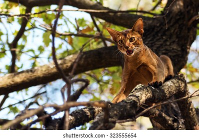 Scared cat outdoors on tree