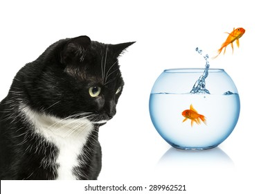 scared goldfish jumping out of a fishbowl in front of a cat