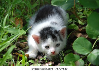 Scared little kitten sitting in the grass